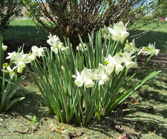 Spring Plants Awaken