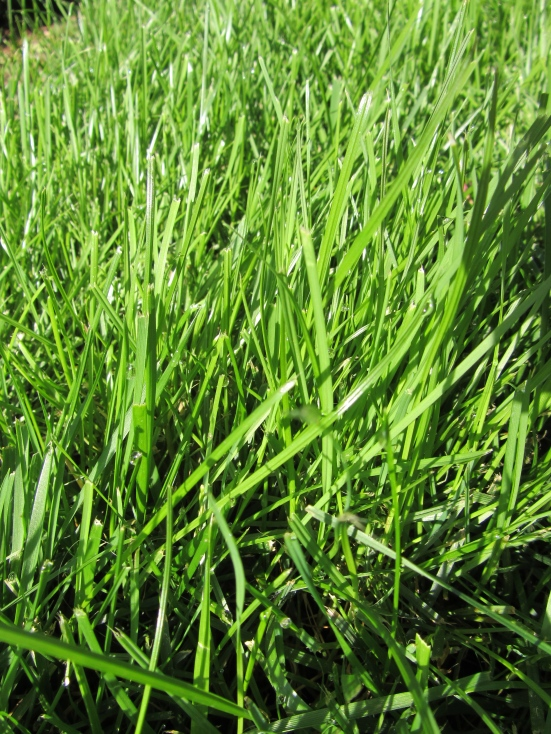 Lawn turf problems?