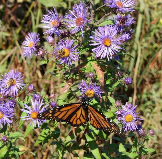 A Place Butterflies Call Home