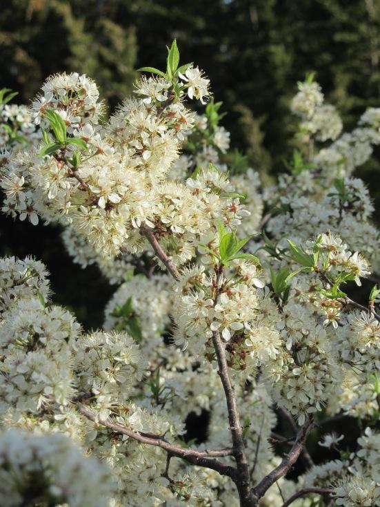 Raising Pollinator Bees
