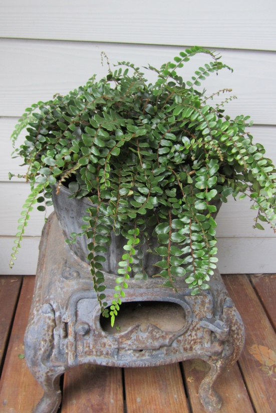 Deconstructing Container Gardens For Winter