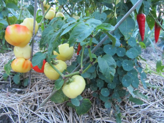 Community Garden Conversation With Coral Huber