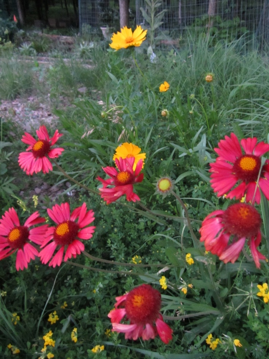 What Are Your 'Tried & True' Flowers?
