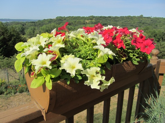 Professional Grower Gives Plant Tips