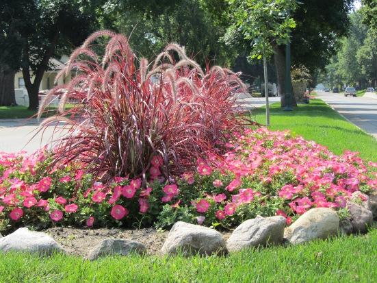 Plant Tips: Standout Plants