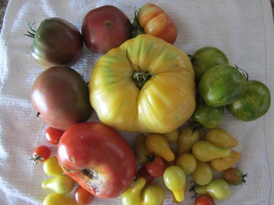 Dibbles & Bits on Garden Basics