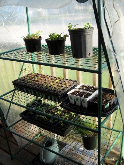 greenhouse-2 (480x640)