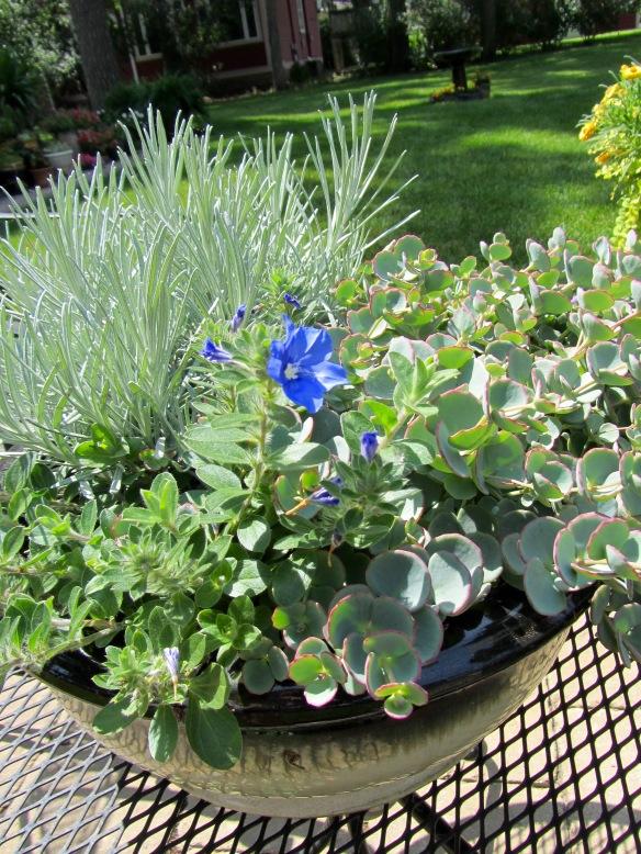 Debbie S Container Plants Ideas Plant Exchange Blog