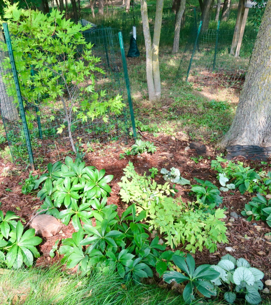 See first flower and first vegetables in our mid season garden.
